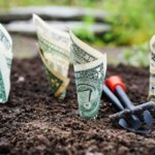 Money in ground